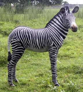LIFE SIZE Statue Wild Baby Zebra Foal Zoo Animal Safari Jungle