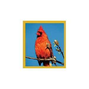 New Magnetic Bookmark Red Cardinal High Quality Modern Design