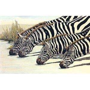 Four Zebras Drinking Poster Print: Home & Kitchen
