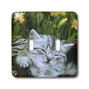 Jackie Popp Nature N Wildlife animal   Sleeping kitten   Light Switch
