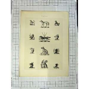 A Plate Of Heraldry Crests C1790 C1900 Wild Animals