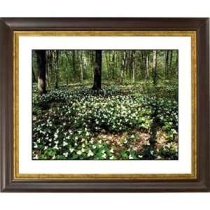 Forest Flowers Gold Bronze Frame Giclee 20 Wide Wall Art