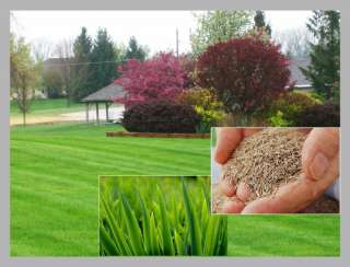 500g TOUGH HARD WEARING LAWN GRASS SEED CREATE REPAIR ENHANCE MULTI