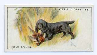 VINTAGE FIELD SPANIEL JOHN PLAYER DOG CIGARETTE TOBACCO CARD SCENIC