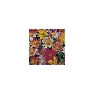 BIRD DAHLIA Mixed Colors Flower Seeds *Comb S/H Patio, Lawn & Garden