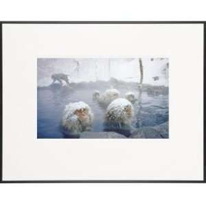 Group of Snow Monkeys in Hot Spring LIFE Magazine Fine Art Collection